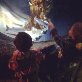 Aquarium.png 2